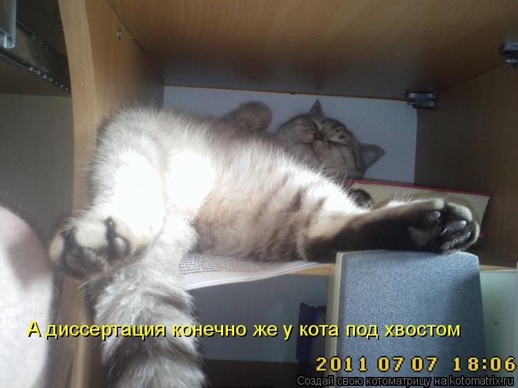Котоматрица - А диссертация конечно же у кота под хвостом