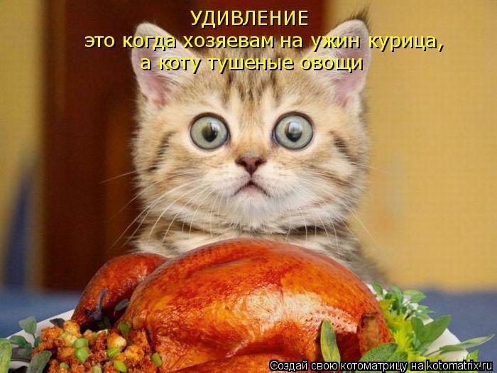 Котоматрица: УДИВЛЕНИЕ это когда хозяевам на ужин курица, а коту тушеные овощи