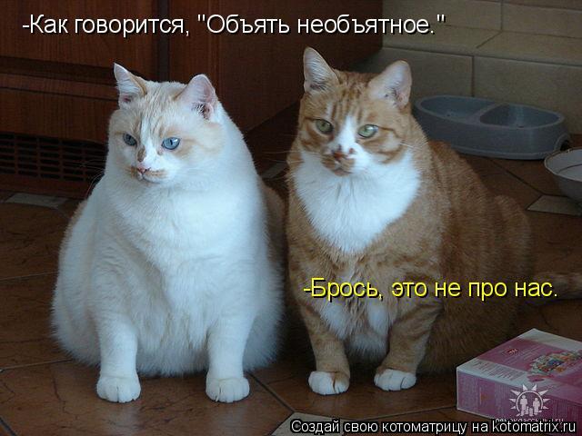 """Котоматрица: -Как говорится, """"Объять необъятное."""" -Брось, это не про нас."""