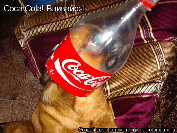 Котоматрица: Сoca Cola! Вливайся!