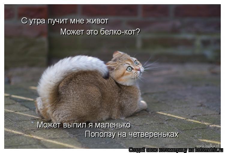 Котоматрица: С утра пучит мне живот Может это белко-кот? Может выпил я маленько Поползу на четвереньках