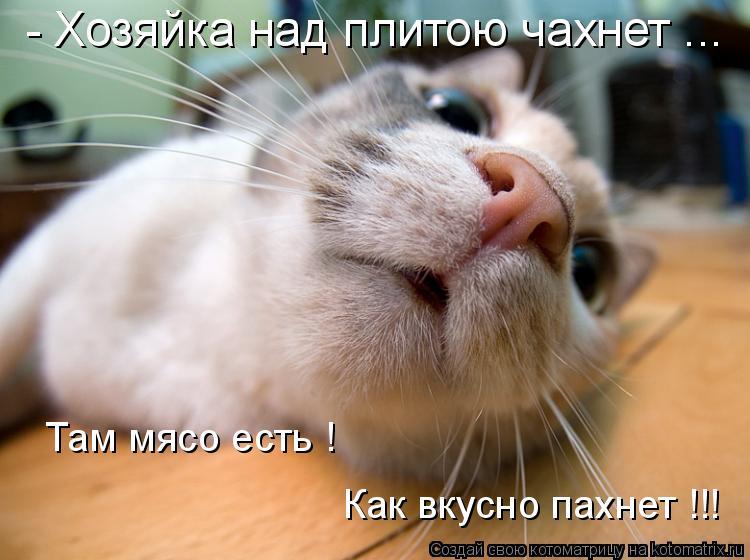 Котоматрица: - Хозяйка над плитою чахнет ... Как вкусно пахнет !!! Там мясо есть !