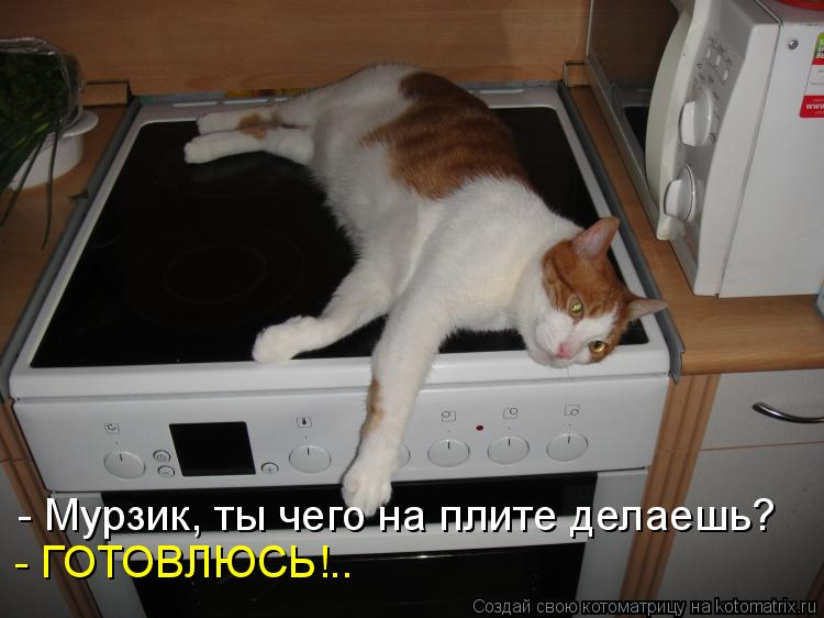Котоматриця!)))) - Страница 7 954518