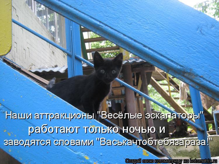 """Котоматрица: Наши аттракционы """"Весёлые эскалаторы""""  работают только ночью и  заводятся словами """"Васькачтобтебязараза!"""""""