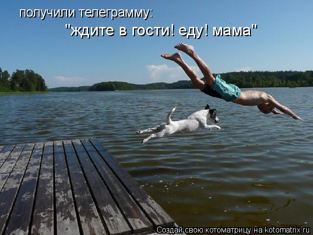 """Котоматрица: получили телеграмму: """"ждите в гости! еду! мама"""""""