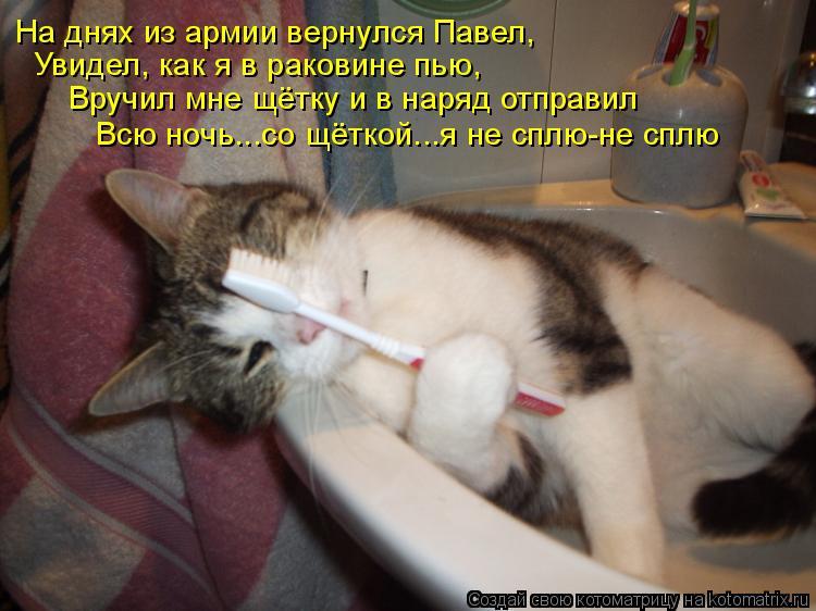 Котоматрица - На днях из армии вернулся Павел, Увидел, как я в раковине пью, Вручил