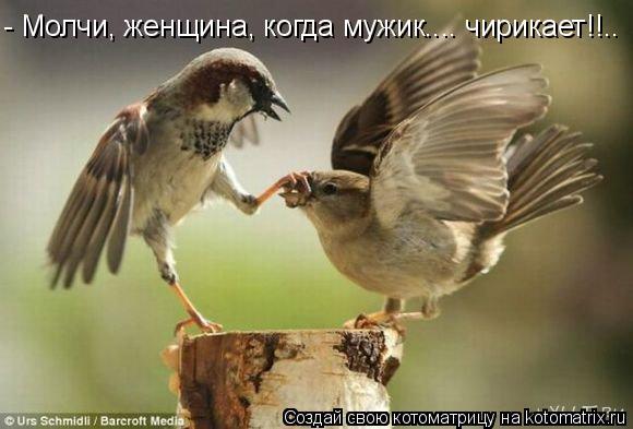 Котоматрица: - Молчи, женщина, когда мужик.... чирикает!!..