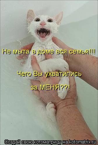 Котоматрица: Не мыта в доме вся семья!!! Чего Вы ухватились  за МЕНЯ??!