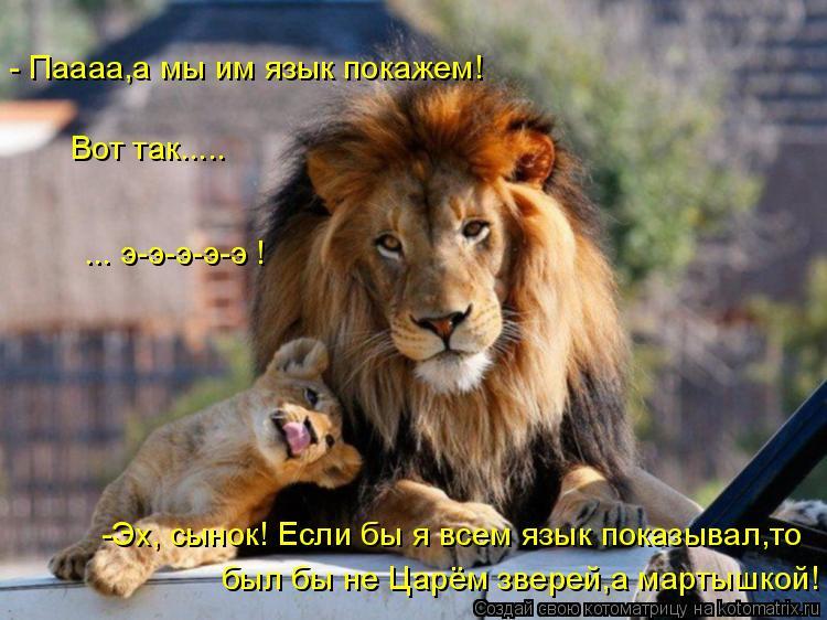 Котоматриця!)))) - Страница 7 955184