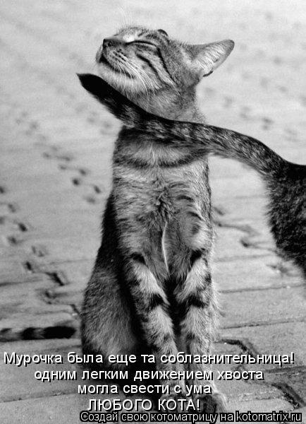 Котоматрица: Мурочка была еще та соблазнительница!  одним легким движением хвоста могла свести с ума любого кота! одним легким движением хвоста могла св