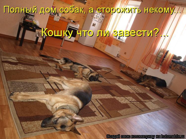 Котоматриця!)))) - Страница 7 955287