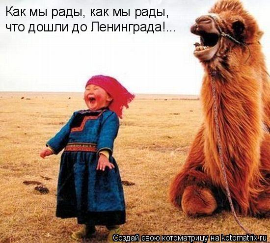 Котоматрица: Как мы рады, как мы рады, что дошли до Ленинграда!...