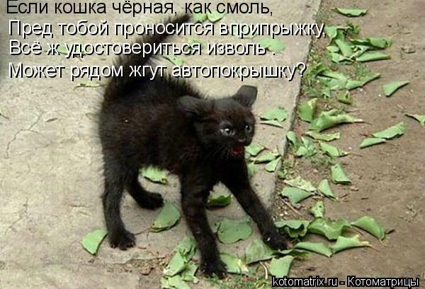 Котоматрица: Если кошка чёрная, как смоль, Пред тобой проносится вприпрыжку, Всё ж удостовериться изволь –  Может рядом жгут автопокрышку?