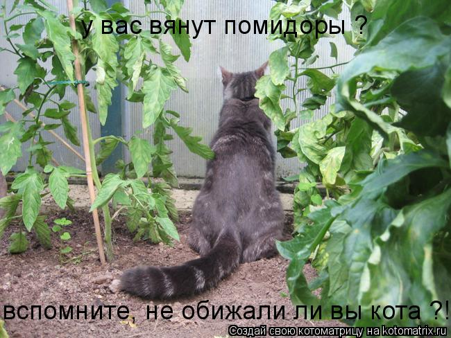 Котоматриця!)))) - Страница 7 955944