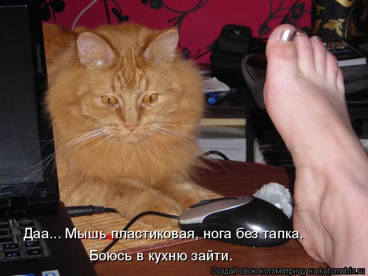 Котоматрица: Даа... Мышь пластиковая, нога без тапка.  Боюсь в кухню зайти.