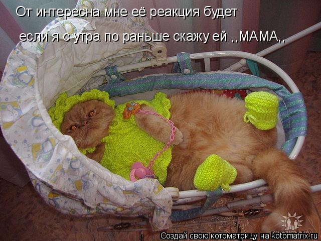 Котоматриця!)))) - Страница 7 955993