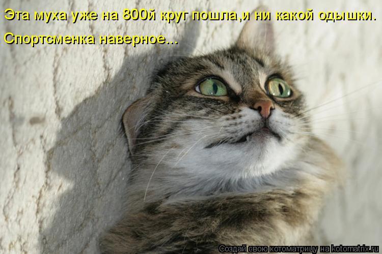 Котоматриця!)))) - Страница 7 955998