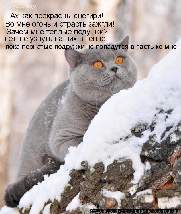 Котоматрица: Ах как прекрасны снегири! Во мне огонь и страсть зажгли! Зачем мне теплые подушки?! нет, не уснуть на них в тепле пока пернатые подружки не по