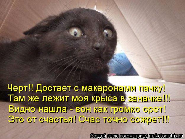 Котоматрица: Черт!! Достает с макаронами пачку! Там же лежит моя крыса в заначке!!! Видно нашла - вон как громко орет! Это от счастья! Счас точно сожрет!!!