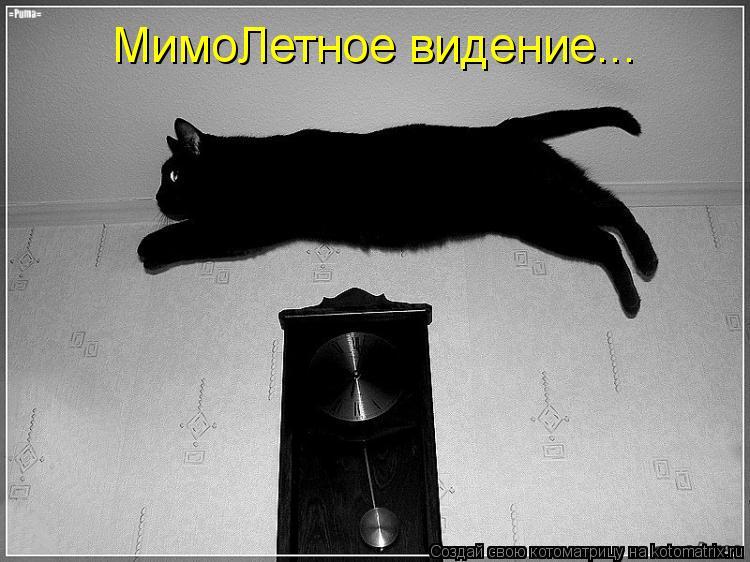 Котоматрица - МимоЛетное видение...