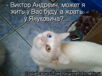 Котоматрица: - Виктор Андреич, может я  жить у Вас буду, а жрать у Януковича?..
