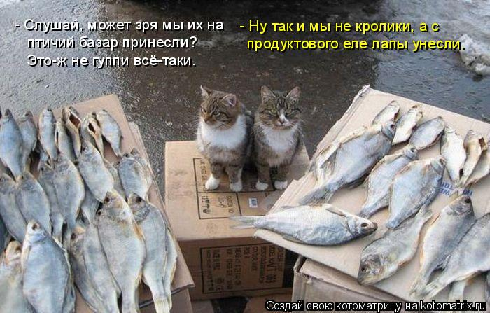 Котоматрица: - Слушай, может зря мы их на птичий базар принесли? Это-ж не гуппи всё-таки.  - Ну так и мы не кролики, а с продуктового еле лапы унесли.