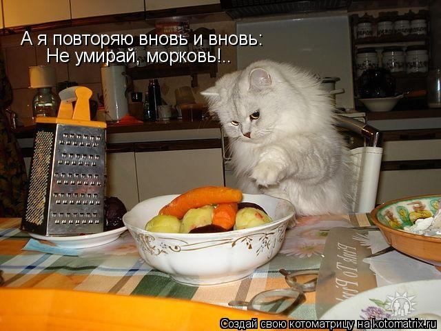 Котоматрица: А я повторяю вновь и вновь: Не умирай, морковь!..