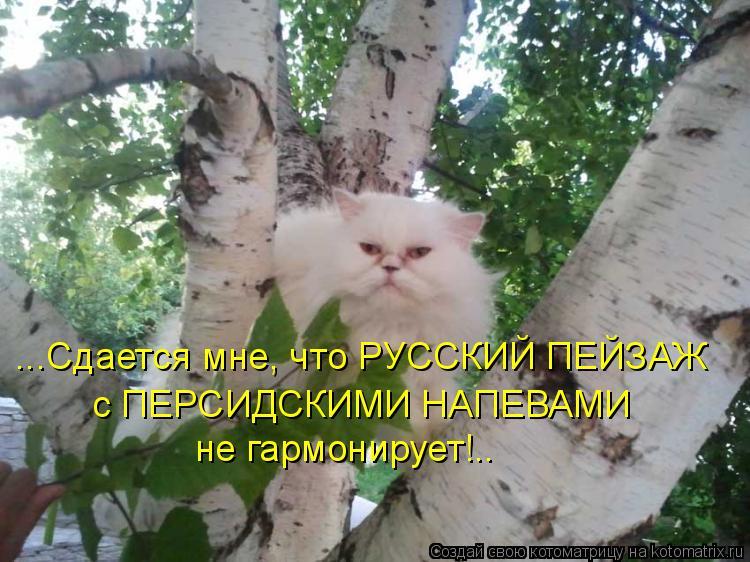 Котоматрица: ...Сдается мне, что РУССКИЙ ПЕЙЗАЖ с ПЕРСИДСКИМИ НАПЕВАМИ не гармонирует!..