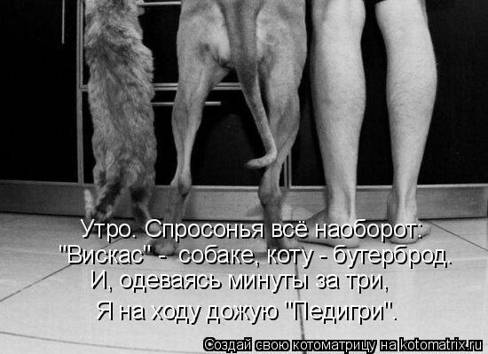 "Котоматрица: Утро. Спросонья всё наоборот: ""Вискас"" -  собаке, коту - бутерброд. И, одеваясь минуты за три, Я на ходу дожую ""Педигри""."