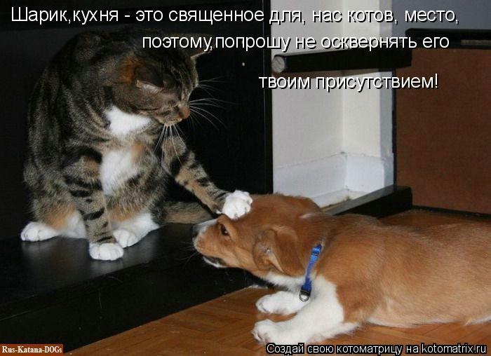 Котоматрица: Шарик,кухня - это священное для, нас котов, место, поэтому,попрошу не осквернять его твоим присутствием!