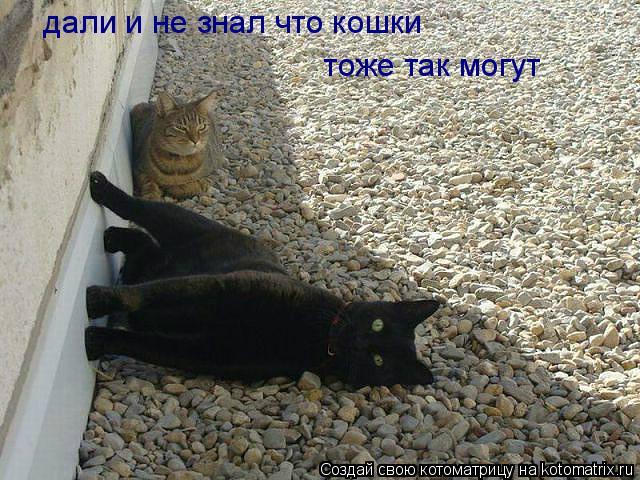 Котоматрица: дали и не зналкошки плагиат  дали и не знал что кошки  тоже так могут