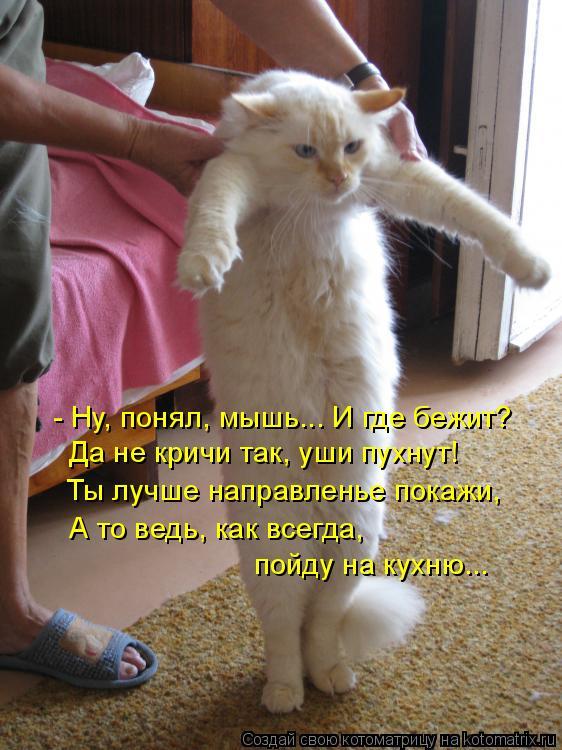 Котоматрица: - Ну, понял, мышь... И где бежит?  Да не кричи так, уши пухнут!  Ты лучше направленье покажи,  А то ведь, как всегда,    пойду на кухню...