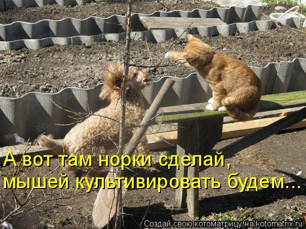 Котоматрица: А вот там норки сделай, мышей культивировать будем...