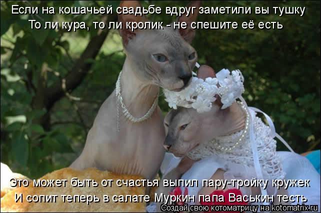 Котоматрица - Если на кошачьей свадьбе вдруг заметили вы тушку То ли кура, то ли кро