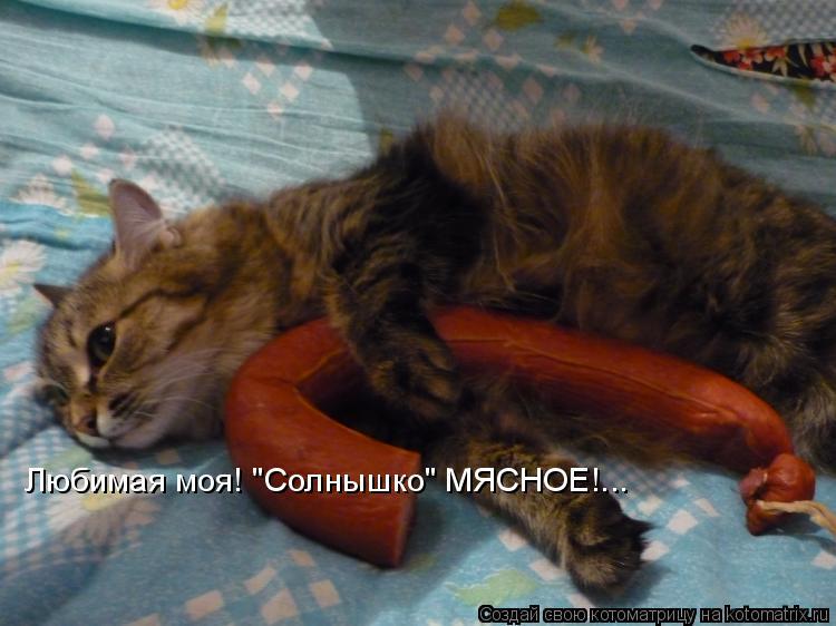 """Котоматрица: Любимая моя! """"Солнышко"""" МЯСНОЕ!..."""