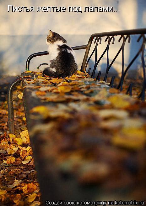 Котоматрица: Листья желтые под лапами...