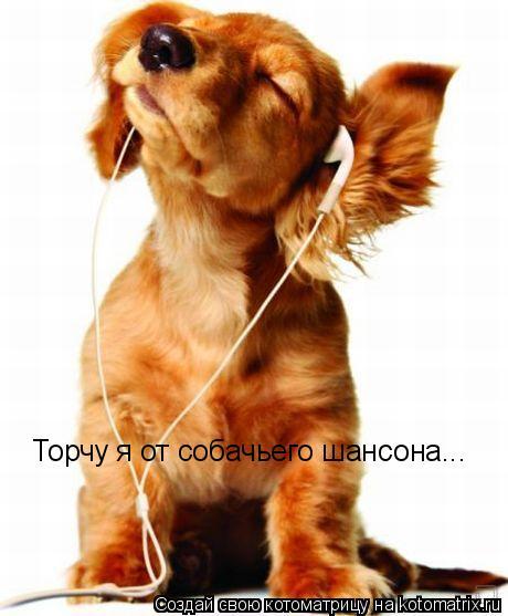 Котоматрица: Торчу я от собачьего шансона...