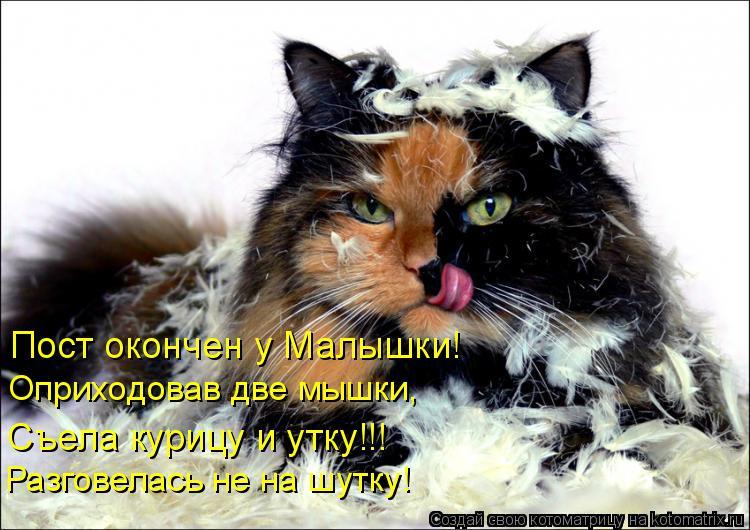 Котоматрица: Пост окончен у Малышки! Оприходовав две мышки, Разговелась не на шутку! Съела курицу и утку!!!