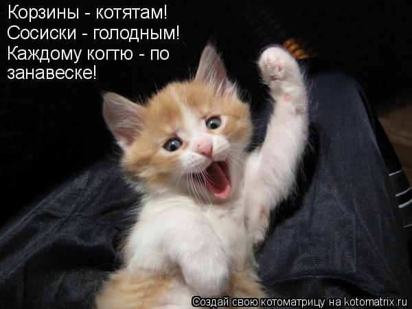 Котоматрица: Корзины - котятам! Сосиски - голодным! Каждому когтю - по занавеске!