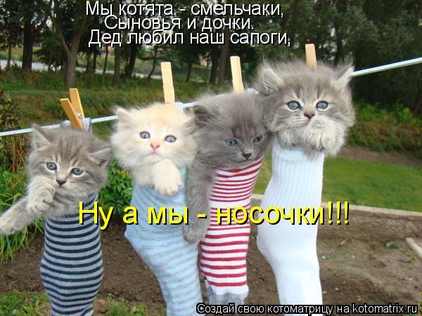 Котоматрица - Мы котята - смельчаки,  Сыновья и дочки.  Дед любил наш сапоги,  Ну а