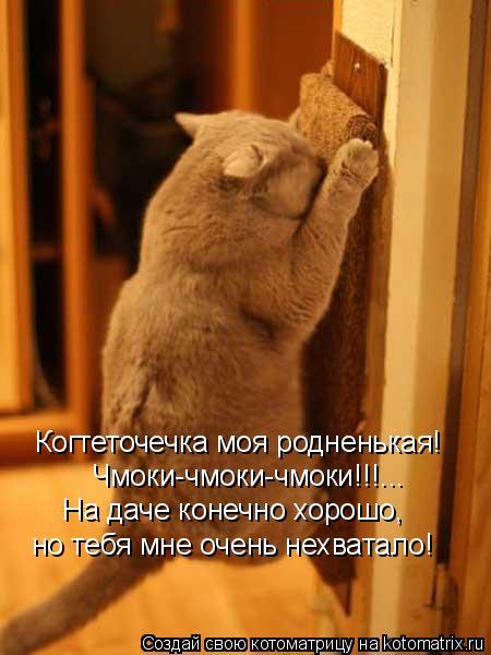 Котоматрица: Когтеточечка моя родненькая! Чмоки-чмоки-чмоки!!!... На даче конечно хорошо,  но тебя мне очень нехватало!