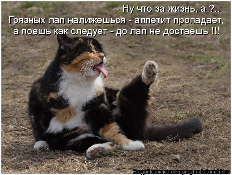 Котоматрица: Грязных лап налижешься - аппетит пропадает, а поешь как следует - до лап не достаешь !!! - Ну что за жизнь, а ?..