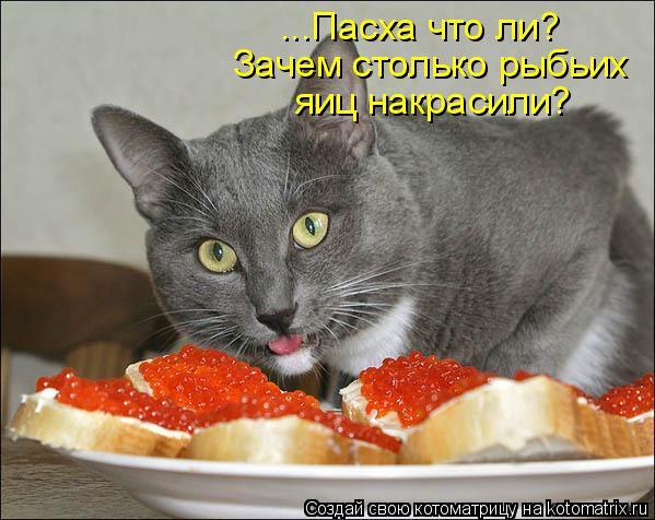 Котоматрица: ...Пасха что ли? ...Пасха что ли? Зачем столько рыбьих  яиц накрасили?