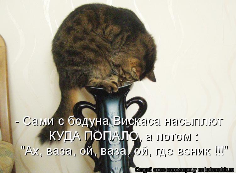 Котоматрица - - Сами с бодуна Вискаса насыплют КУДА ПОПАЛО, а потом :