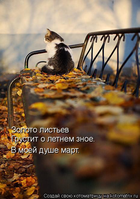 Котоматрица: Золото листьев Грустит о летнем зное. В моей душе март.