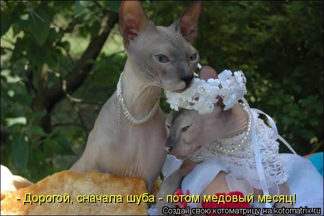 Котоматрица: - Дорогой, сначала шуба - потом медовый месяц!