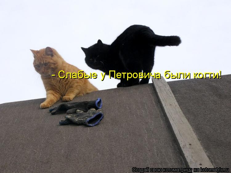 Котоматрица: - Слабые у Петровича были когти!