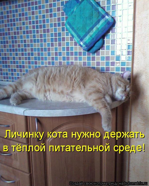 Котоматрица: Личинку кота нужно держать в теплой питательной среде! ..