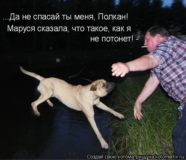 Котоматрица: Маруся сказала, что такое, как я ...Да не спасай ты меня, Полкан! не потонет! -