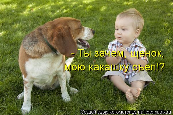 Котоматрица: - Ты зачем, щенок,  мою какашку съел!?